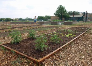 Epiphany Community Garden